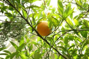 naranja colesterol bueno